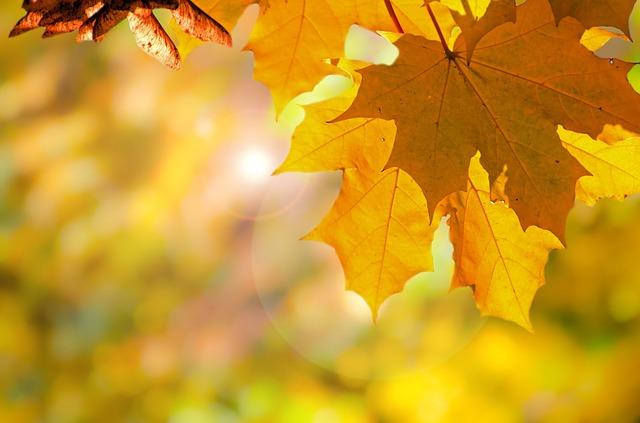 autumn-220110_640