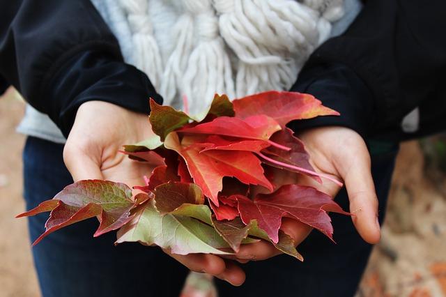 leaves-1031181_640
